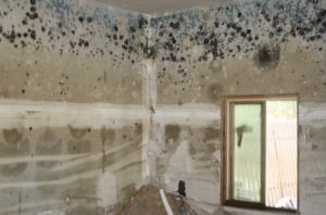 Mold Growth On Walls And Ceiling